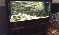 5ft display fish tank. Sump tank underneath the display