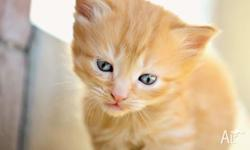 6 kittens ready for forever homes... 2 ginger kittens,