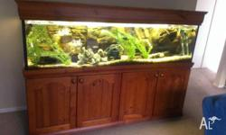 Large 6 foot fish tank including fish and complete set