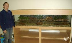 6ft Turtle Tank, Water Dragon or Water Monitor Set up.
