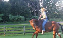 Hi Community, I have a beautiful 9y/o quarter horse and