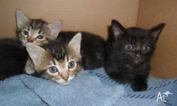Cute and playful kittens, need a loving home. All