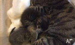 These kittens are more like dogs than cats - they love
