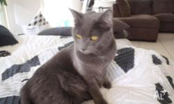 Billie is a shy but sweet natured cat who has been a