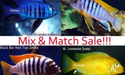 - FINTASTIC CICHLIDS ORMEAU � Like us on Facebook -