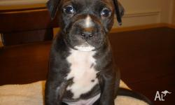 cute and healthy looking puppies for sale for more