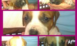 I have 10 beautiful pups for sale. Mother is a bull