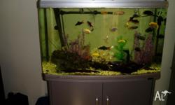 aqua one 980T aquarium with canister filter sale