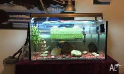 I am selling my 3 ft fish tank aquarium! I haven't had