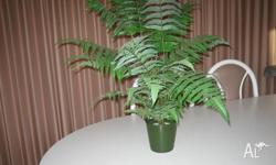 2 artifial ferns vg quality 76 cm high paid $45 each