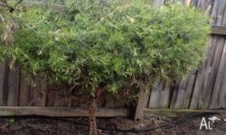 FREE hedge plants to spruce up your garden or to shield