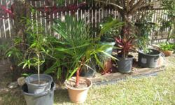 Assorted potted plants, including lipstick palm,