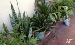 Assorted Potted Plants for sale Orchard's (Now in
