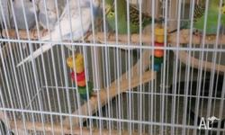 I have a few baby budgies for sale. Varying colours,