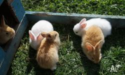 I HAVE 4 X GINGER RABBITS AND 4 X WHITE RABBITS FOR
