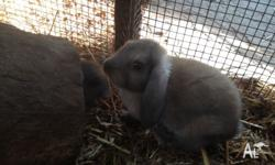Baby rabbits ready for new homes on Wednesday. One