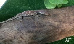 We have baby sand monitors for sale, $420 each. Basic