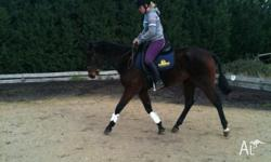 Bart is a 9 yr old bay tb gelding only had a couple of