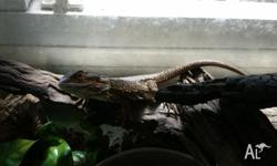 I have two bearded dragons that I need gone ASAP to a