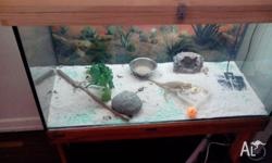 Selling my bearded dragon with 3ft tank with stand,