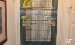 This is a large, sturdy cage. Could house 2 Budgies