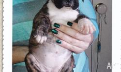 6 puppies 2x Female 4x Male wormed,