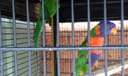 hi im selling my two lorikeets must go asap $280 ono
