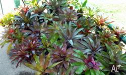 Bromeliads and assorted plants, including very healthy
