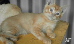 I have a lovely red kitten available to a family that