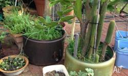 for sale cactus plants and old washing machine tubs as