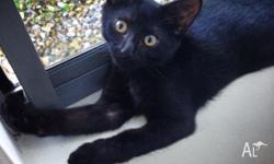 Hello Everyone, I am selling my Kitten Lilly. Sadly my