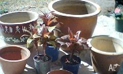 I have 5 ceramic pots for sale, various sizes from