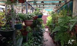 Plants, Pots & many more, Madow Grass, Bonsia's, Pony