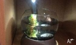 Hi I have a small fish tank it is 27cm tall and 32cm