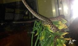 For sale children's python and enclosure have all