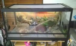 3yr old children's python with Reptile one enclosure