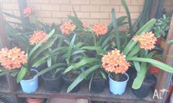 Beautiful big bright orange flowers during spring &