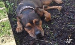NAME: Clyde AGE: 6yrs 1 month BREED: Mixed breed DOGS: