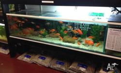 Cold Water fish from $4.50 -shubunkins -red and white