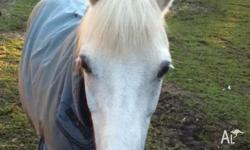 Bella is a 13.2hh 17year old pony available for free