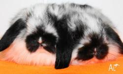 I have 2 so cute and adorable baby bunnies for sale.