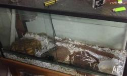 Great tank, almost brand new and perfect for Snakes,
