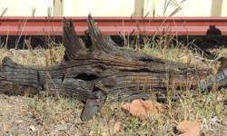 Decorative wood pieces for sale. GREAT for reptile