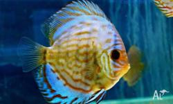 Melbourne Tropical Fish Imports Dandenong - New