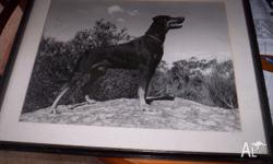 i have for sale a doberman picture/photo 63.5 x 52.5