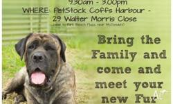 Dog Adoption Day WHEN: 11th Oct 2014 from 9.30am to