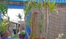 I have 5 plants available for sale the plants which