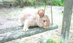 BOY BUNNY RABBIT I AM LOOKING FOR A HOME TO LOVE ME FOR