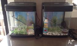 We have 2 identical fish tanks given to my children for