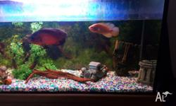 Up for sale is my 4ft fish tank plus timber stand. Sale